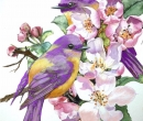 Birds and Flowers Limited Print